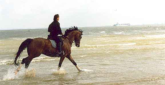 Galopp am Strand